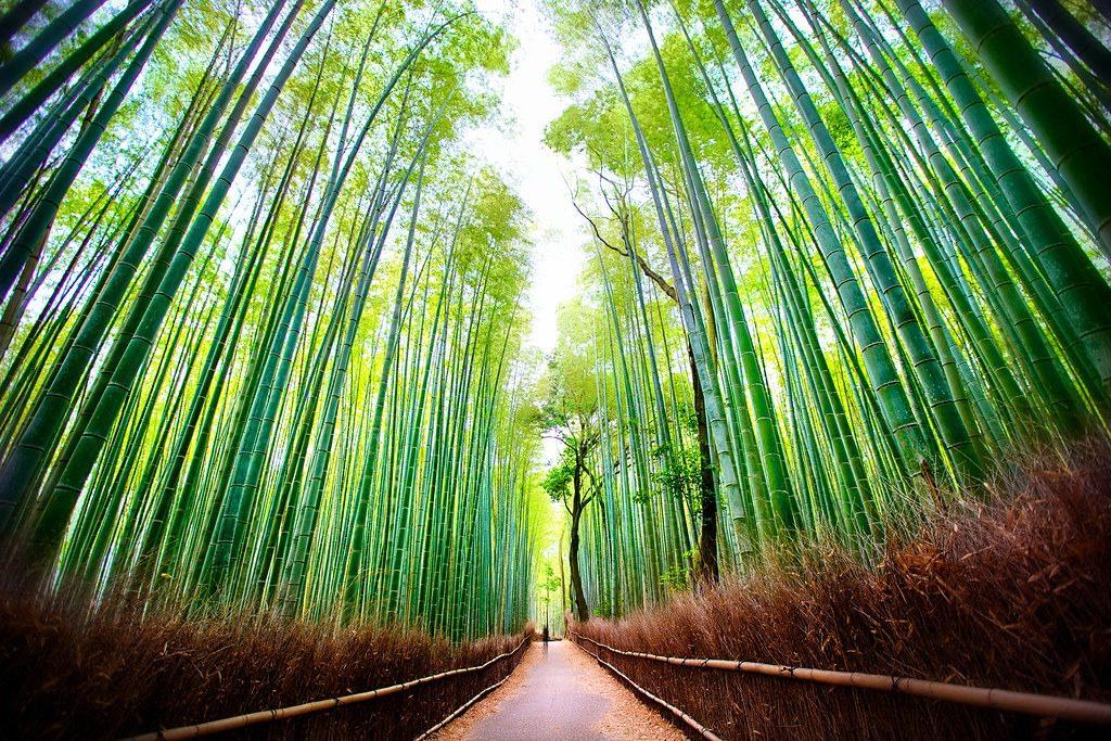 arashiyama jepang